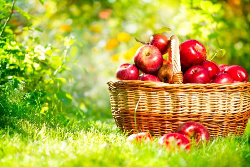 tg-apples_large