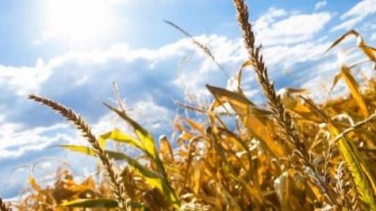 Синоптики спрогнозировали, когда жара в Украине станет невыносимой
