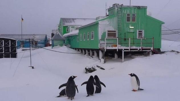 Украинское правительство выделило средства на приобретение ледокола для антарктических экспедиций