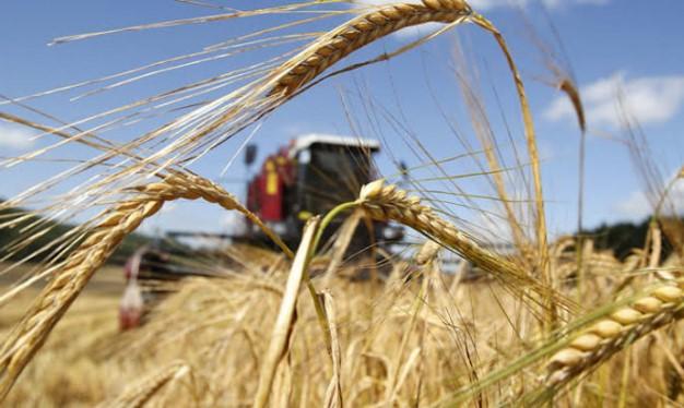 Держава дала гарантії фермерам на отримання кредитів для покупки землі